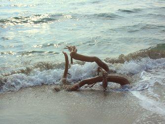 Eine Wurzel in einer Welle