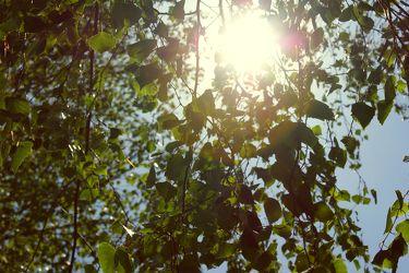 Sonne im Blätterdach