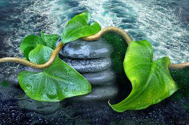 Bild mit Wasser, Pflanzen, Stein, Meer, Blätter, Blätter, Steine, Pflanze, Blatt, See, Wassertropfen, Stilleben, Wellness, Zweige, Zweig, zen