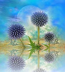 Bild mit Kunst, Pflanzen, Himmel, Wolken, Blumen, Sonnenuntergang, Disteln, Sonne, Blume, Pflanze, Distel, Floral, Stilleben, Blüten, Florales, blüte, dekorativ, Dekoration