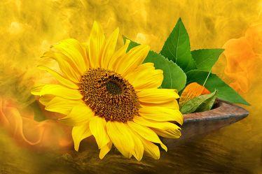 Goldene Sonne