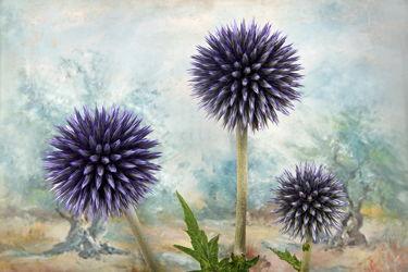 Bild mit Natur, Pflanzen, Blumen, Disteln, Blume, Pflanze, Distel, Fauna, Flora, Blüten, blüte