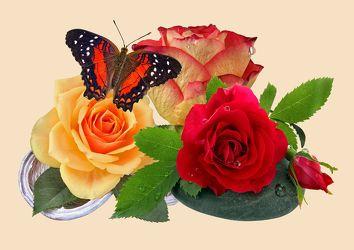 Rosen-Schmetterling 3