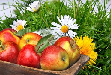 Bild mit Früchte, Blumen, Obst, Wiese, Löwenzahn, Pusteblume, Apfel, Apfel, gänseblümchen