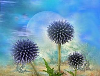 Bild mit Natur, Pflanzen, Blumen, Sonnenuntergang, Disteln, Sonne, Landschaft, Blume, Pflanze, Distel, Toskana, Blüten, blüte, romantisch