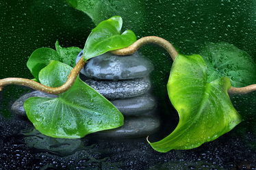 Bild mit Wasser, Grün, Pflanzen, Stein, Blätter, Steine, Pflanze, Blatt, Wassertropfen, Wellness, zen