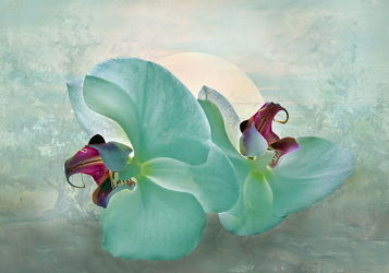 Bild mit Pflanzen, Blumen, Sonnenuntergang, Orchideen, Sonne, Landschaft, Blume, Orchidee, Pflanze, Floral, Stilleben, Blüten, Florales, blüte