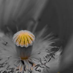 Bilder mit Blüten