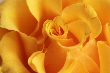gelbe wellen