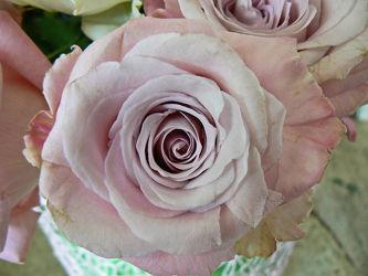 altrosa rosenblüte