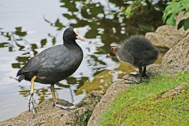 Bild mit Wasservögel