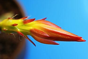 blütenschnabel