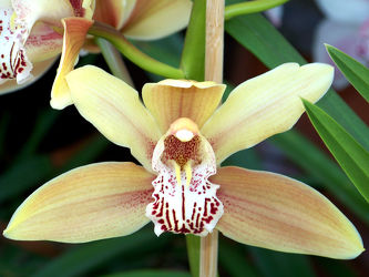 Bild mit Orchidee