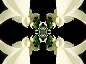 lotos-kakeidoskop