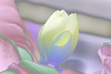 lotus mal anders