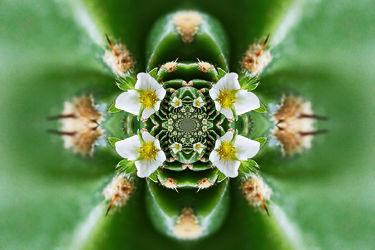 erdbeerblüte und kaktus