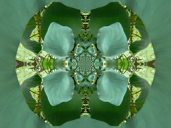 lotuseffekt