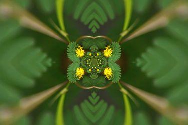 mimose abstrakt
