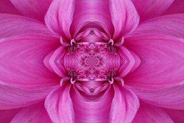 ornament in lila