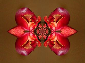 ornament von callablüten
