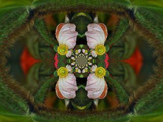 ornament von mohnblüten