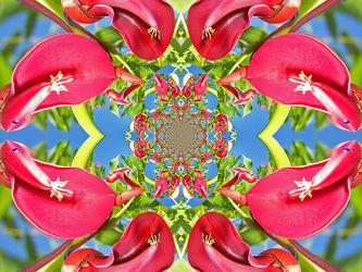 ornament aus roten blüten