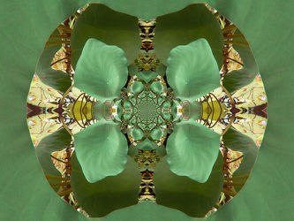 grün, braunes ornament