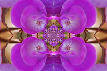 lila rosenornament