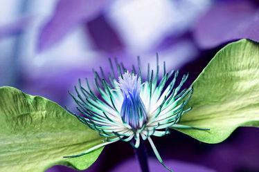 blütenflügel 5