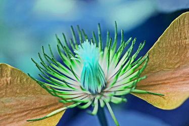 blütenflügel 4