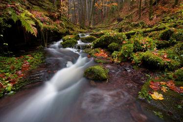 Bild mit Wasser, Bäume, Wälder, Wald, Baum, Blätter, Forest, Blatt, Landschaften im Herbst, Regen, Quelle, Urwald, leaf, leaves