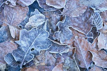 Bild mit Natur, Winter, Schnee, Eis, Wälder, Sonnenuntergang, Sonnenaufgang, Wald, Baum, Blätter, Blatt, winterlandschaft, Kälte, Frost