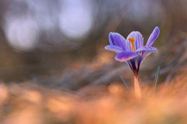 Bilder mit Blume