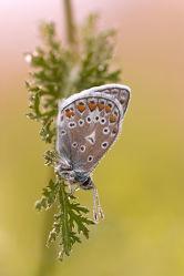 Bild mit Schmetterlinge