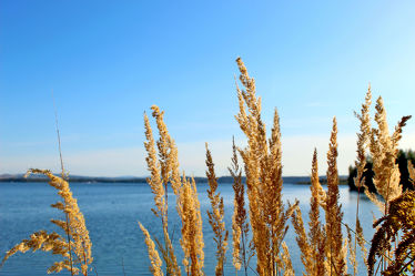 Bild mit Gewässer, Seeblick, Schilfgras, See, Berzdorfer See, Görlitzer See, Schilfrohr, Phragmites australis
