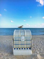 Möwe auf dem Strandkorb