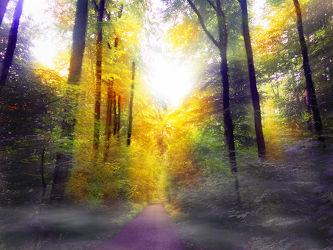 Bild mit Natur, Bäume, Herbst, Nebel, Wald, Lichtung, Baum, Weg, Waldweg, Landschaft, Waldblick, Waldbild, Waldbilder, Wald Bild, Mischwald, Gegenlicht, Laubwald, mystisch