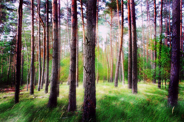 Bild mit Natur, Bäume, Nadelbäume, Wälder, Wald, Lichtung, Baum, Baum, Nadelbaum, Pinie, Kiefer, Kiefergewächs, Baumstamm, Landschaft, Märchenwald, Waldblick, Blick in den Wald, Forstwirtschaft, Forest, Waldbild, Waldbilder, Wald Bild, Wald Bilder, Nature, Tree, Baumstämme, Mischwald, Baumgewächs, Waldrand, Blick in den Wald mit Gegenlicht, Waldboden, mystisch