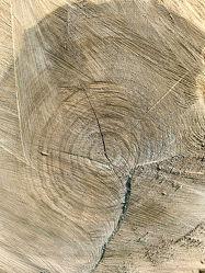 Holzstruktur 4