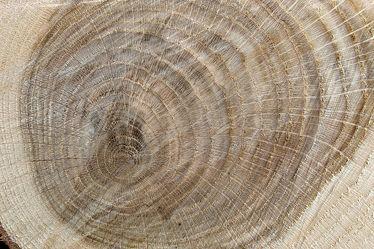 Eichenholz Holzstruktur 1