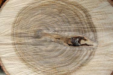 Eichenholz Holzstruktur 2