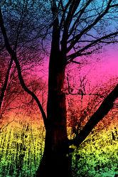 Farbiger mystischer Waldblick
