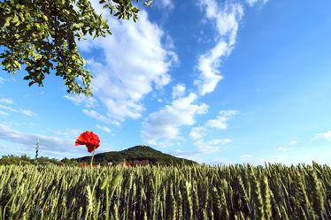 Bild mit Natur, Pflanzen, Wolken, Blumen, Mohn, Wolkenhimmel, Landschaft, Blume, Pflanze, Mohnblume, Görlitz, Feld, Landeskrone, Hausberg, Oberlausitz, Landschaftspanorama