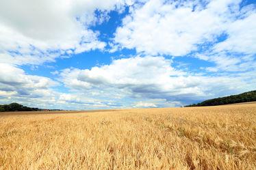 Bild mit Natur, Wolken, Wolkenhimmel, Landschaft, Weitblick, Feld, Perspektive, Landeskrone, Oberlausitz, Feldblick, getreidefeld