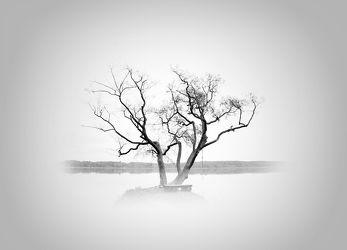 Bild mit Kunst, Natur, Baum, Landschaft, Scharmützelsee, Entspannung, art, Black and White, schwarz weiß, mystisch, Minimalismus, minimal art