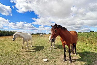 Bild mit Tiere, Pferde, Tier, Kinderbild, Kinderbilder, Pferd, reiten, Reitpferd, Pferdekoppel, Horse, Pferdeliebe, pferdebilder, pferdebild