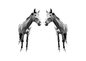 Bild mit Kunst, Tiere, Tiere, Pferde, Pferde, Tier, Tier, Kinderbild, Kinderbilder, Pferd, Pferd, Black and White, schwarz weiß, reiten, Minimalismus, minimal art, Horse, Pferdeliebe, pferdebilder, pferdebild, minimalart