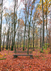 Parkbank im Herbst