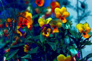 Flower of Power -Stiefmütterchen