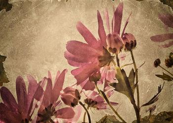 Bild mit Pflanzen,Blumen,Blume,Pflanze,Flower,Blüten,VINTAGE